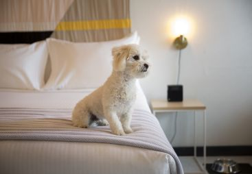 Pet Friendly Accommodations at Sandman Santa Rosa Hotel